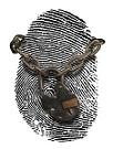 identity theft thumb